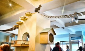 revista-magazine-visualmerchandising-escaparatismo-retail-design-window-cafe-cats-vishopmag-001